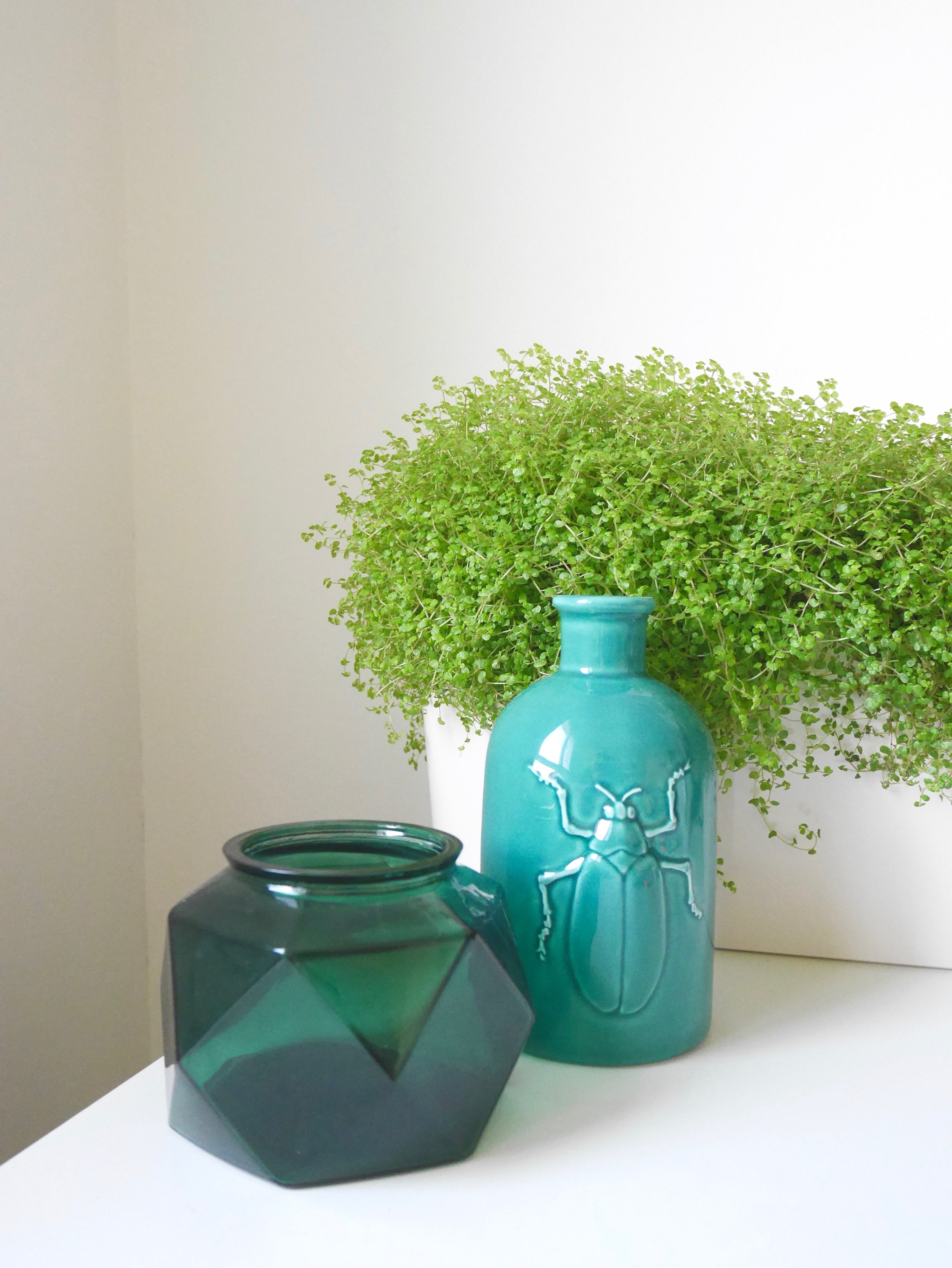 plantes réservoirs d'eau