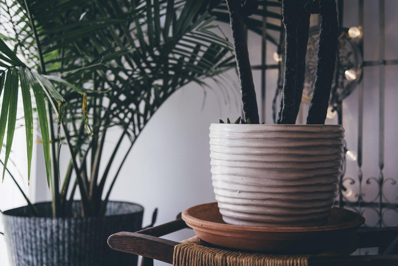 plante décoration