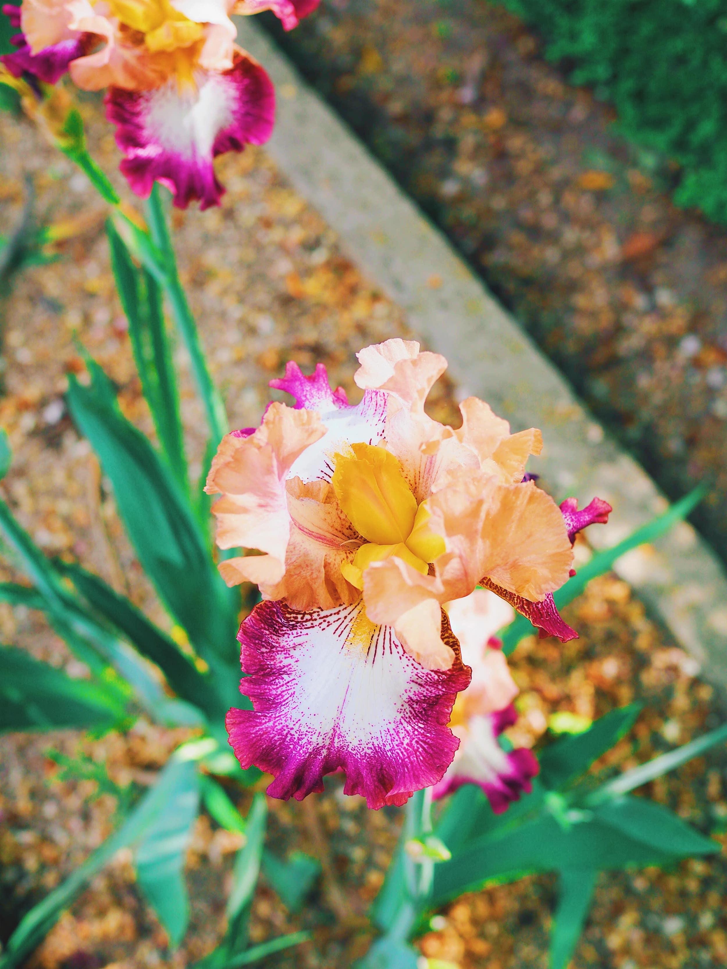 jardin-botanique-prado