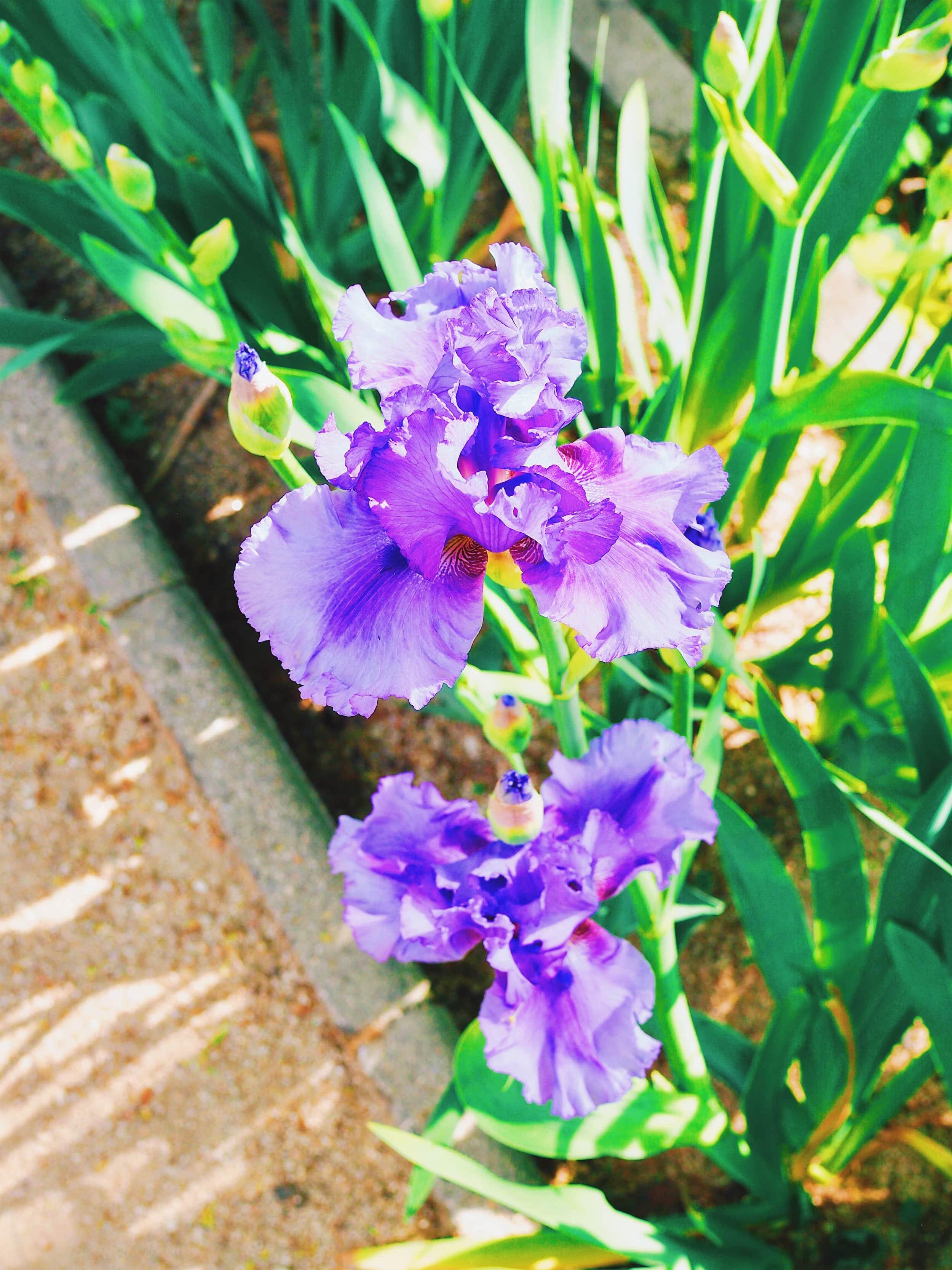 parc-botanique-prado