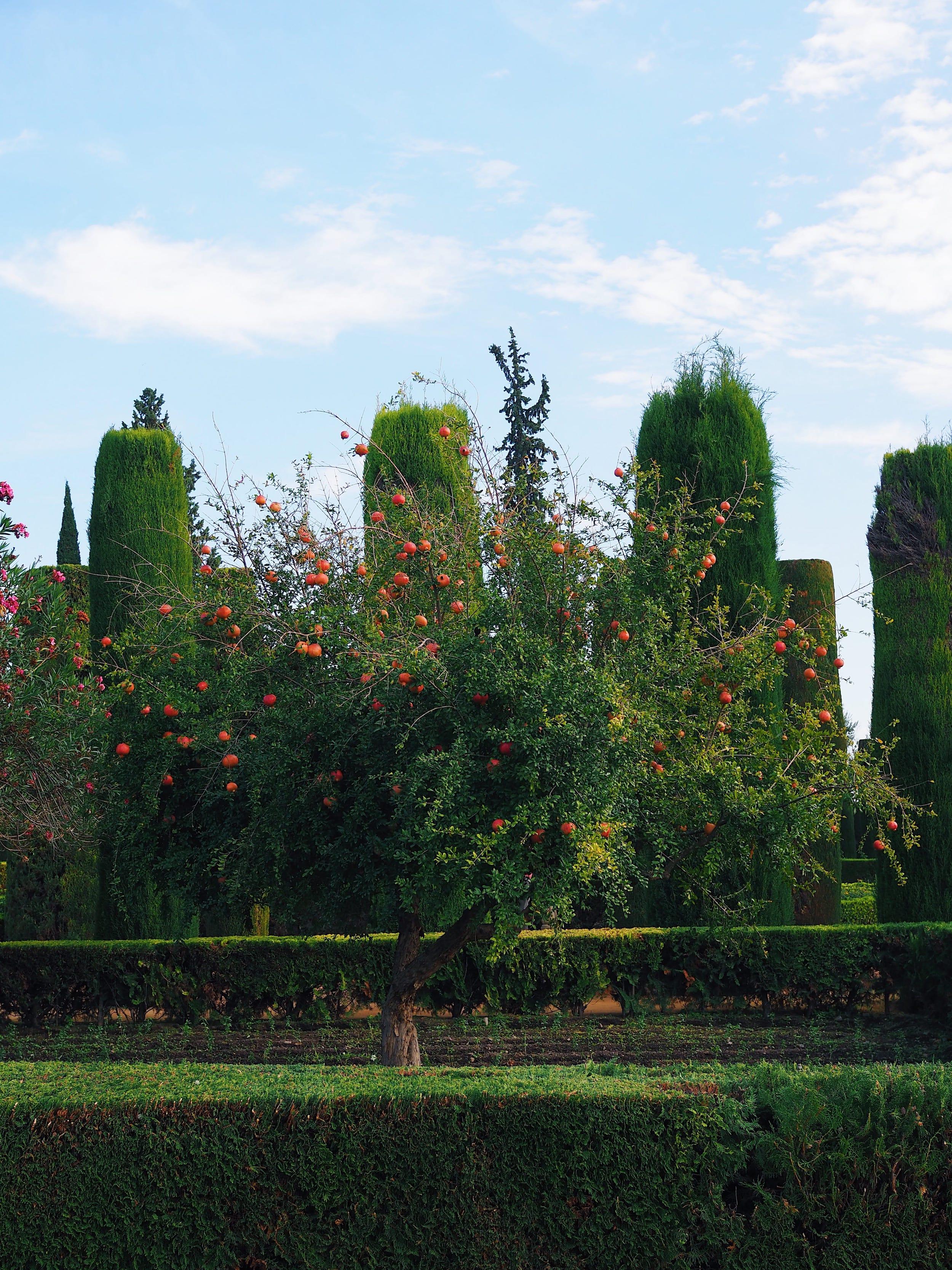 jardin-de-l'alcazar-cordoue