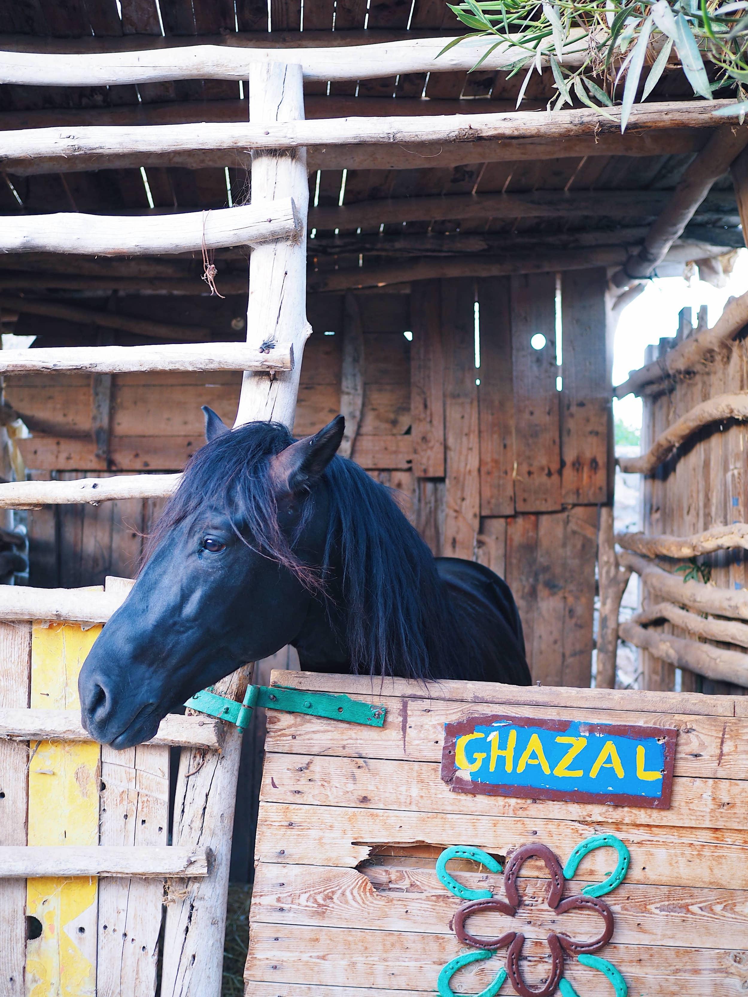 randonnée-cheval-essaouira